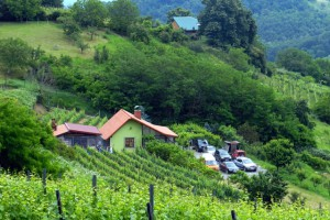 Mjesto druženja vinogradara