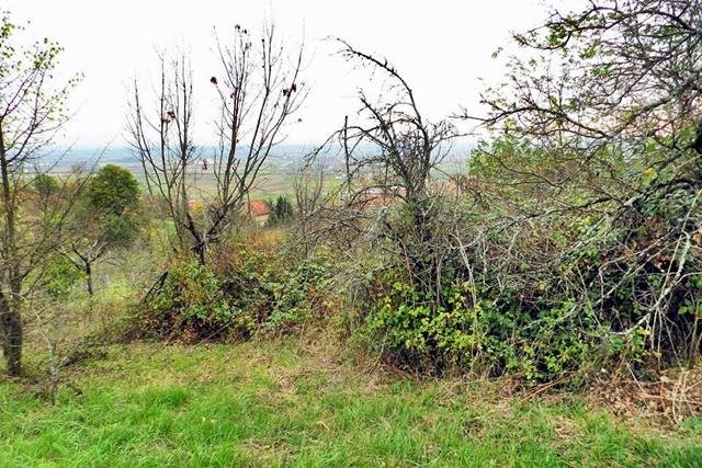 Napušteni vinograd na obroncima Dilja